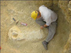 Professor Jacobs excavating arm of Angolan dinosaur found at Iembe, north of Luanda.