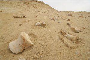 "The fossils of Angola are a ""Museum in the Ground""."