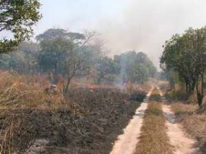 01_Burning Cangandala
