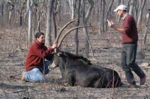 Pete and Pedro with another bull.
