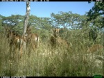 Herd behind the dry grass