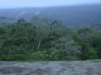 Kumbira Forest.
