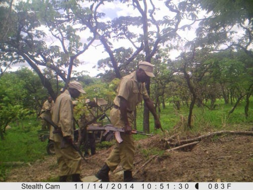 Rangers inspecting the site; Os rangers inspeccionando o local.