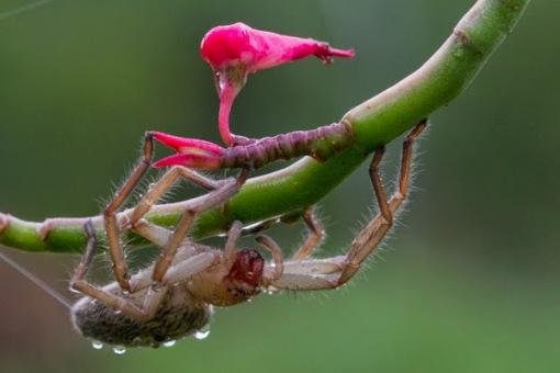 A spider after the rain. Uma aranha depois da chuva.