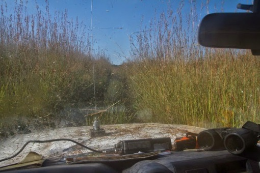 Driving through long grass; Conduzindo através do capim.
