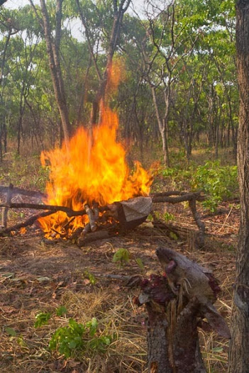 Setting the poacher's camp on fire. Queimando o acampamento dos furtivos.