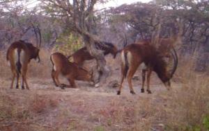 Herd at S2