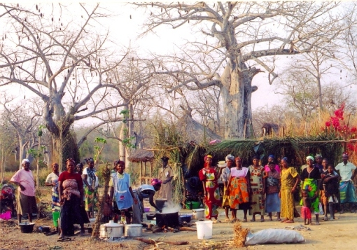 Women's cooperative joins forces to prepare local dishes such as the local kubulu bean dish 4. Baobob trees used to serve as water reservoirs, their location kept secret from other tribes