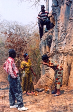 Baobob trees used to serve as water reservoirs, their location kept secret from other tribes.