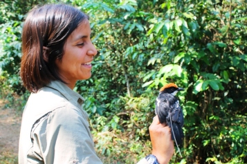 Seven weeks of field study were undertaken by Aimy Cáceres in Kumbira Forest, pictured here with the Endemic Gabela Bush-shrike.