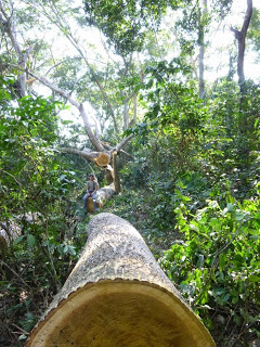 Logging the Kumbira Forest, a biodiversity hotspot poses a threat to endemic species. Photo, A.Cáceres from http://kumbiraforest.blogspot.pt