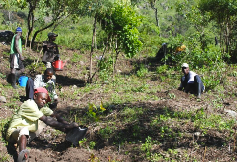 Nursery workers in the process of planting some of the 42 newly planted trees in a recently cleared area.