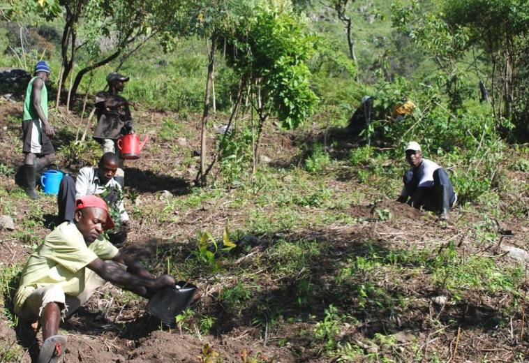 Image result for deforestation in angola