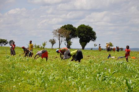 Women working the fields in Huambo province