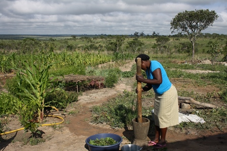 Food security is a looming issue in southern Africa