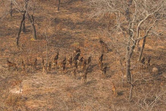 Giant Sable | Angola Field Group