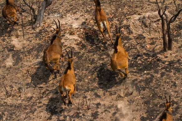 Giant Sable   Angola Field Group